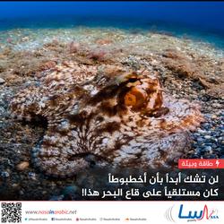 لن تشك أبداً بأن أخطبوطاً كان مستلقياً على قاع البحر هذا!