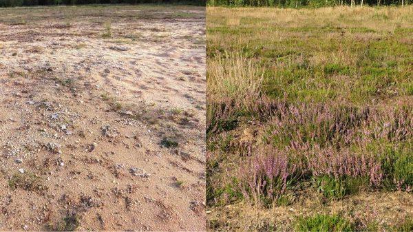محصول الشجيرات القمئية الخصب بعد ثماني سنوات (على اليمين) حيث أضيفت التربة مقارنة مع الأراضي التي تتجدَّد بمفردها. حقوق الصورة: E. R. Jasper Wubs