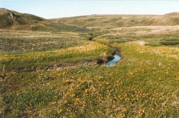 صورة تُظهر الغطاء النباتي في المنتزه الإقليمي لجزيرة هيرشل في مقاطعة يوكون عام 1987، كما قدمته عالمة البيئة القطبية الشمالية إسلا ميرس سميث Isla Myers-Smith. حقوق الصورة: Isla Myers-Smith/University of Edinburgh