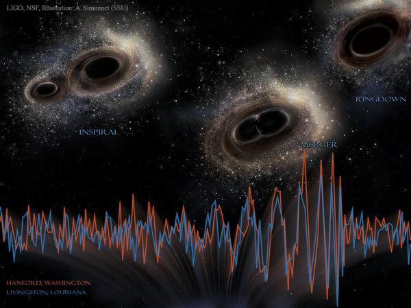 خلال المرحلة الأولية من الدمج المعروفة باسم مرحلة الانتقال للحركة الحلزونية inspiral، يدور الثقبان الأسودان حول مركز مشترك للكتلة ويقتربان تدريجياً من بعضهما البعض، ثم يحدث الدمج السليم وتنبعث معظم الأمواج الثقالية، تمثل الخطوط الحمراء والزرقاء أسفل الصورة الإشارات الثقالية المصاحبة لاندماج الثقب الأسود. بعد الاندماج الكامل، يصبح الثقب الجديد الوحيد الآن خاضعاً لتذبذبات يُشار إليها بظاهرة تخفيض تيار النداء (المرحلة التي تكون فيها الموجات الثقالية الناتجة سعتها أكبر ما يمكن) ringdown. المصادر: LIGO، NSF، Aurore Simonnet (Sonoma State U.)