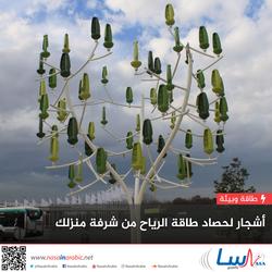 أشجار لحصاد طاقة الرياح من شرفة منزلك