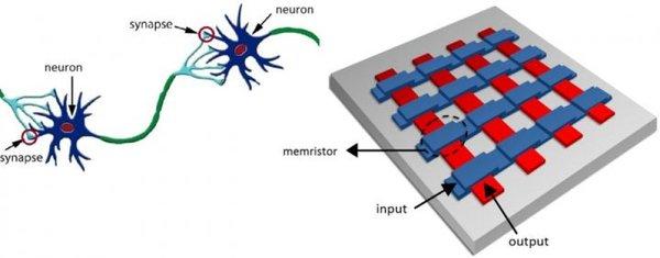 الصورة_على اليسار: تمثيل مبسّط لجزءٍ صغير من أجزاء الدماغ، والذي يحتوي على خلايا عصبية تقوم باستلام ومعالجة ونقل الإشارات عبر ما يُسمّى بالوصلات العصبية (synapses). على اليمين: مصفوفة تقاطعيّة تمثّل إحدى التصاميم المحتملة والقادرة على القيام بعمل مشابه لعمل الخلية العصبية الحقيقية وذلك بالنسبة للأجهزة. تمتلك الميمرستورات _والتي تقابل الوصلات العصبية في الدماغ_ القدرة على تغيير الموصلية الكهربائية لها، وذلك لتتمكن من إضعاف التوصيلات أو تقويتها. حقوق الصورة: مجموعة سبينترونيكس للمواد الوظيفية_جامعة جرونينجن (Spintronics of Functional Materials group, University of Groningen).