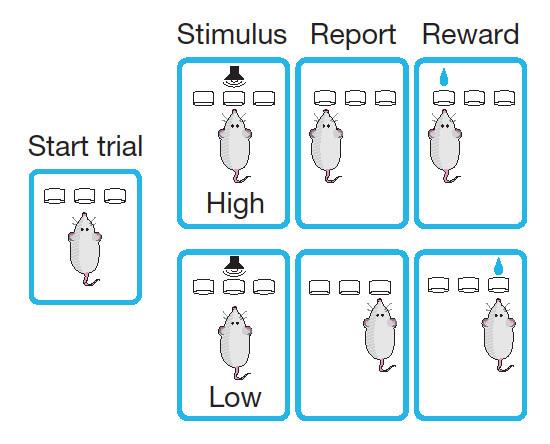 """دَرَّب فريق زادور الفئران على الربط ما بين نغمات محددة مع جائزة. توجِه الاختلافات في النغمة الفأر إلى البحث عن الجائزة إما إلى يمين صندوق التدريب أو إلى يساره . قام الفريق فيما بعد بفك تشفير الشفرة العصبية التي تُشَفِّرُ بها الحيوانات الذكريات الخاصة بهذه القرارات. حتى بعد موت الحيوانات، استطاع العلماء أن """"يقرأوا عقول هذه الفئران""""."""