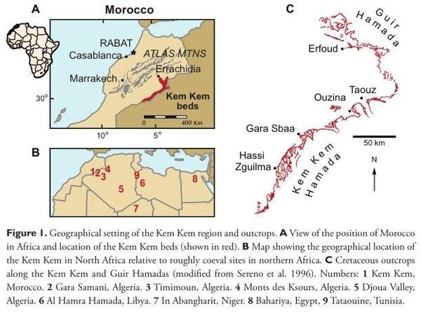 (حقوق الصورة: Ibrahim et al., ZooKeys, 2020)