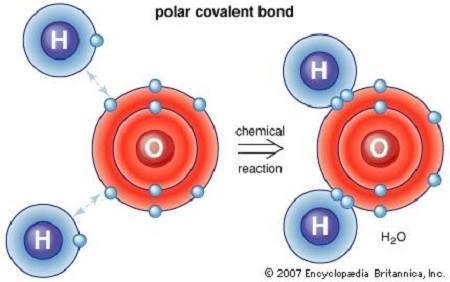 شكل يوضح جزيء الماء، الذي يتألف من ذرتي هيدروجين وذرة أوكسجين. والرابطة مشتركة قطبية. حقوق الصورة: britannica.com