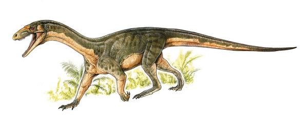 امتلك شبه الديناصور تيليوكراتر رادينوس منخفضًا على مستوى الجمجمة كان يعتقد أن الديناصورات فقط من تفرّدت به. حقوق الصورة: MUSEO ARGENTINO DE CIENCIAS NATURAES « BERNARDINO RIVADAVIA »(BUENOS AIRES,ARGENTINA)ARTWORK BY GABRIELLIO