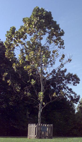 أشجار أبولو من القمر
