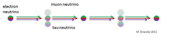 الشكل الثاني: الإلكترون نيوترينو، هو مزيج من نيوترينوهات نوع الكتلة الثلاثة، التي، بسبب كتلها المختلفة، سوف تتنقل في سرعات مختلفة قليلاً. وهذا يعني أن الإلكترون نيوترينو سوف يتطور إلى مزيج من ثلاثة نيوترينوهات من نوع التفاعل الضعيف، ثم يعود إلى نيوترينو الإلكترون. (في الواقع، إن هذا تبسيط شديد، حيث أن تذبذب ثلاثة أنوع من النيوترينو عادة ما يكون له ترددان، وليس واحداً كما هو مبين هنا.) إن هذا التأثير، الحسّاس للاختلافات في تربيعات كتل النيوترينو وللمزج بين نيوترينوهات نوع الكتلة ونوع التفاعل الضعيف، قابل للقياس ويمكن أن يستخدم كمجس قوي لخصائص النيوترينو.