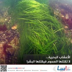 الأعشاب البحرية... لا تقتلها السموم فيقتلها البشر!
