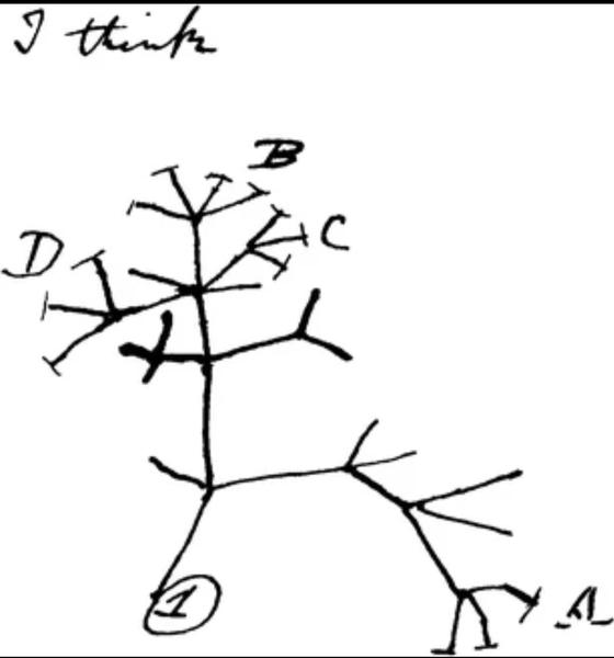 (شجرة داروين التي وجدت على دفتر ملاحظاته)