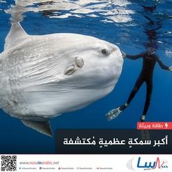 أكبر سمكة عظمية مكتشفة