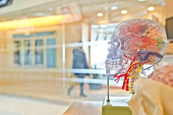 بحث جديد يكشف كيف يمكن لبعض كبار السن أن يكونوا معمرين فائقين بذاكرة مرنة غير اعتيادية.