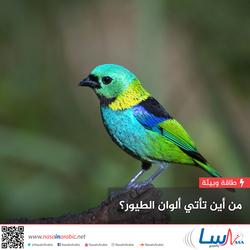 من أين تأتي ألوان الطيور؟