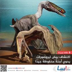 اكتشاف بيض تيروصورات يحوي أجنة محفوظة جيدًا
