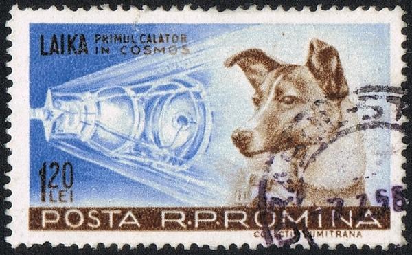 صورة لطابع بريدي تذكاري في رومانيا يُظهر الكلبة لايكا وهي أول كلبةٍ انطلقت إلى الفضاء.  Wikipedia Commons حقوق الصورة: