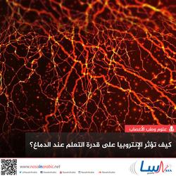 كيف تؤثر الإنتروبيا على قدرة التعلم عند الدماغ؟