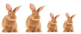 في الشهر التالي وُلد أرنبين صغيرين