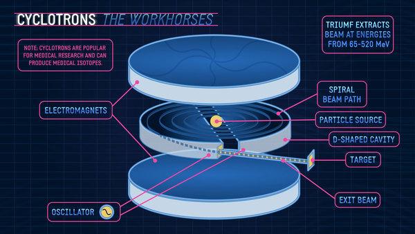يظهر السيكلوترون في الصورة، بوصفه حصان العمل، ونلاحظ أنه يتكون من قرصين من المغانط الكهربائية، يوجد بينهما مسار الحزمة الحلزوني وفي مركزه يتوضع مصدر الحزمة، ويحيط بالمسار من كلا الجانبين تجويفان مذبذبان على شكل حرف D، تخرج الحزمة من أحدهما لتصطدم بالهدف، وبنجاحٍ يقوم السيكلوترون باستخراج حزمة بطاقة تتراوح بين 65 و 520 مليون إلكتروفولط، مما يجعله مناسباً للأبحاث الطبية وإنتاج النظائر المستخدمة في العديد من المجالات الطبية والعلاجية.
