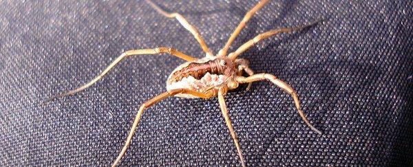 العنكبوت ذات الأرجل الطويلة credit: Anja Jonsson/Flickr