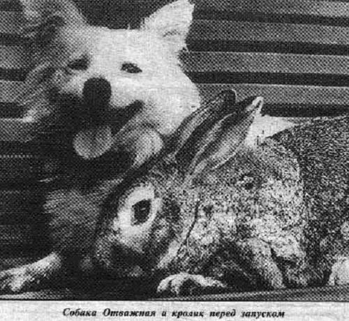 صورة لأتفزهنيا Otvazhnaya ومفروشا Mafrusha، وهما اثنين من أصل ثلاث رواد فضاءٍ شجعان انطلقوا سويةً في 2 يوليو/تموز 1959. Wikipedia Commons (.ru) حقوق الصورة: