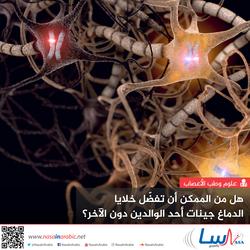 هل من الممكن أن تفضّل خلايا الدماغ جينات أحد الوالدين دون الآخر؟