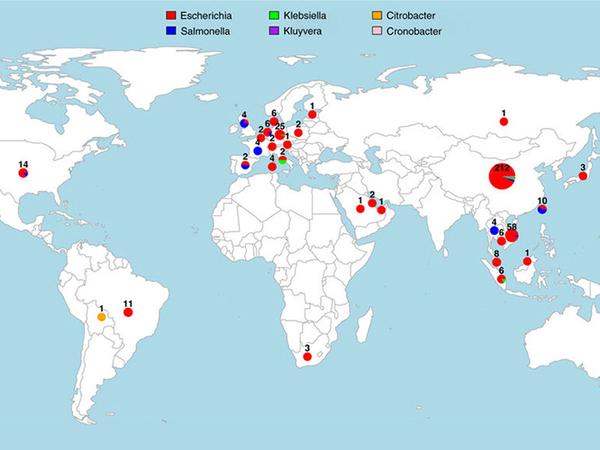 تعقّب mcr-1 حول العالم. (UCL)