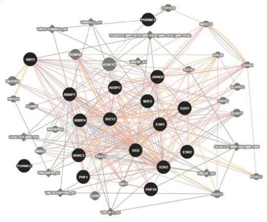 اكتشاف العلماء أنّ التعبير عن شبكة الجينات ESC/E(Z) يضطرب بشكل منتظم في الـ PMDD. حقوق الصورة: الطبيب بيتر شميدت Peter Schmidt،NIMH، والطبيب دافيد غولدمان David Goldman،NIAAA