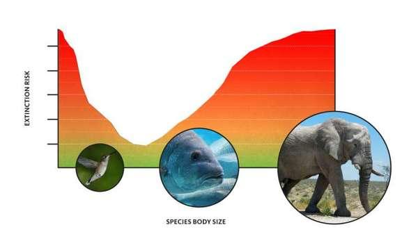 خطر الانقراض أكبر على الحيوانات ذات الحجم بالغ الصغر أو الكبر. حقوق الصورة: Oliver Day، جامعة ولاية أوريغون.