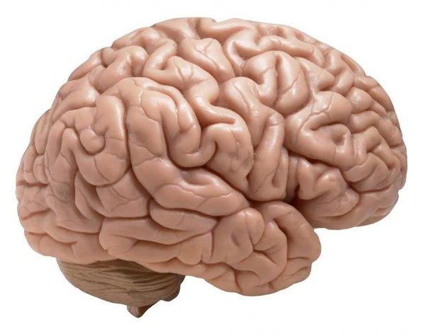 صورة توضيحية. حقوق الصورة: NeuroscienceNews.com