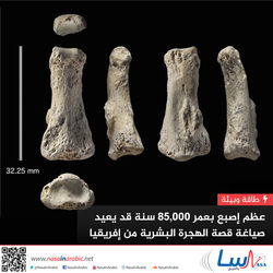 عظم إصبع بعمر 85,000 سنة قد يعيد صياغة قصة الهجرة البشرية من إفريقيا