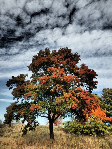 الخريف في السويد بواسطة صديق موقع EarthSky Facebook جورغين نورلاند أندرسون Jörgen Norrland Andersson. أين يجب أن أنظر لأرى ما يشير إلى الاعتدال في الطبيعة؟ إن المعلومات التي تدل على أن الصيف قد انتهى وأن الشتاء قادم موجودة في كل مكان الآن في النصف الشمالي للكرة الأرضية.