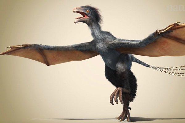 هذه الصورة دفعت علماء الأحافير للجنون. حقوق الصورة: شركة داينوستار Dinostar المحدودة.