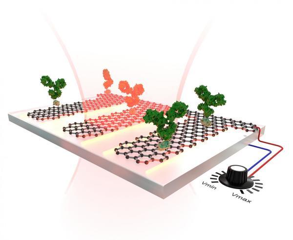 عبر ذبذبة إلكترونات الغرافين بطرق مختلفة، يمكن قراءة كل اهتزازات الجزيئات الموجودة على سطح الغرافين. حقوق الصورة: Science / EPFL / Miguel Spuch / Daniel Rodrigo.