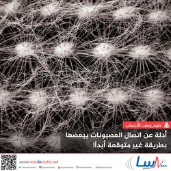 أدلة عن اتصال العصبونات ببعضها بطريقة غير متوقعة أبداً!