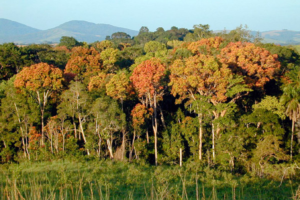 تمثل الغابات المدارية، كهذه الموجودة في غابون في إفريقيا، مستودعًا هامًا للكربون  Sassan Saatchi, NASA/JPL-Caltech