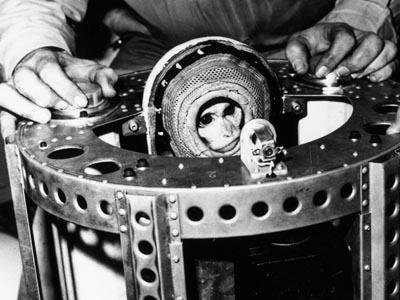 ألبرت 2 Albert II أثناء عملية التحضير لرحلته التاريخية.  حقوق الصورة: NASA