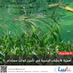 أهمية الأعشاب البحرية في تأمين كوكب مستدام