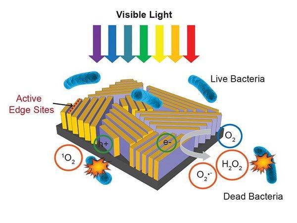 نظرة عن قرب تظهر ثنائي كبريت الموليبدنوم باللون البنفسجي والنحاس باللون الأصفر. حقوق الصورة: سي ليو وآخرون C. Liu et al، مجلة Nature Nanotechnology.