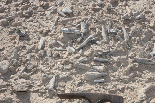 وجد الباحثون حفريات بيض التيروصورات وحفريات أخرى في مجمعٍ للعظام bone bed (حرفيًا يعني ذلك موقعًا يحوي العديد من العظام) في منطقة هامي شمال غرب شينجيانغ، الصين. حقوق الصورة: Alexander Kellner/Museu Nacional/UFRJ