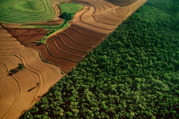 تفقد الأمازون ما يعادل نحو مليون ملعب لكرة القدم من الغطاء النباتي كل عام، يُقطع الكثير منها لإفساح المجال للزراعة. عندما تُفقد الغابات، ينتهي الكربون الذي عُزل في الجو مجدداً، مما يسرع من تغير المناخ. حقوق الصورة: Photograph By Frans Lanting, Nat Geo Image Collection