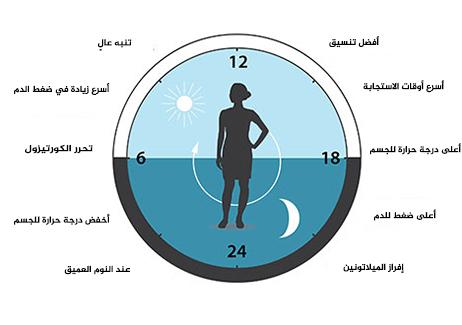 الشكل 3: تتوقع الساعة الحيوية وظائف أعضائنا كما تضبطها لتوافق مراحل اليوم المختلفة. تساعدنا ساعتنا الحيوية على تنظيم أنماط النوم، والسلوك الغذائي، وإفراز الهرمونات، وضغط الدم، ودرجة حرارة الدم.