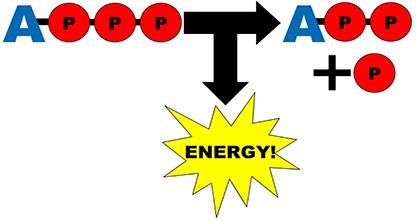 معادلة المحرك الجزيئي