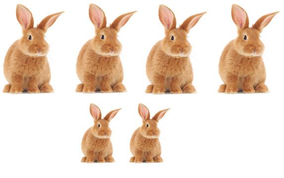 الزوج الأول على أرنبين آخرين