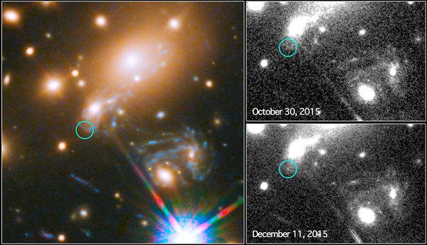 """هذه الصورة المركبة تظهر عملية البحث عن المستعر الأعظم المسمى """"ريفسدال"""" باستخدام تلسكوب هابل التابع لناسا ووكالة الفضاء الأوروبية. تظهر الصورة إلى اليسار جزءاً من أرصاد """"الحقل العميق"""" للعنقود المجري MACS J1149.5+2223 من برنامج فرونتير فيلدز. تشير الدائرة إلى المكان المتوقع للظهور الأحدث للمستعر الأعظم. إلى اليمين نستطيع رؤية واقعة صليب أينشتاين من نهايات 2014. الصورة إلى أعلى اليمين تظهر الأرصاد التي قام بها تلسكوب هابل في شهر أكتوبر/تشرين الأول من سنة 2015، وذلك خلال بداية عملية الرصد للكشف عن أحدث ظهور لانفجار المستعر الأعظم. أما الصورة في أسفل اليمين فتظهر اكتشاف المستعر الأعظم ريفسدال في 11 ديسمبر/كانون الأول 2015 كما تنبأت نماذج عديدة مختلفة. حقوق الصورة: NASA & ESA and P. Kelly (University of California, Berkeley)"""
