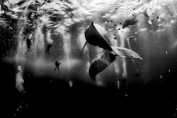 التقاط أعجوبة البحر في حُلةٍ مذهلةٍ من الأبيض والأسود