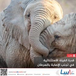 قدرة الفيلة الاستثنائية في تجنب الإصابة بالسرطان