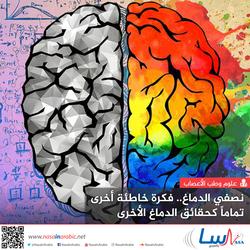 نصفا الدماغ.. فكرة خاطئة أخرى تماماً كحقائق الدماغ الأخرى