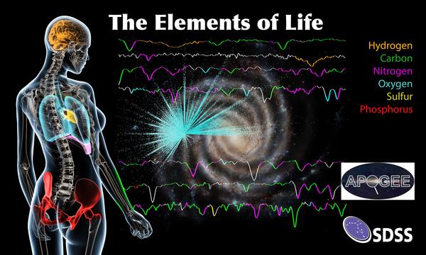 عناصر الحياة الستة الأكثر شيوعا على الأرض والتي تتضمن أكثر من 97% من كتلة جسم الإنسان، هذه العناصر هي الكربون والهيدروجين والنيتروجين والأوكسجين والكبريت والفوسفور. وهي تتواجد بوفرة في مركز مجرتنا. حقوق الصورة: Dana Berry/SkyWorks Digital Inc.; SDSS collaboration