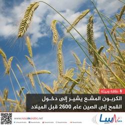 الكربون المشع يشير إلى دخول القمح إلى الصين عام 2600 قبل الميلاد