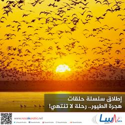 إطلاق سلسلة حلقات هجرة الطيور.. رحلة لا تنتهي!